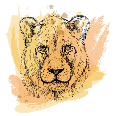 Hand drawn sketch style portrait of lioness isolated on white background. Vector illustration. Çizim