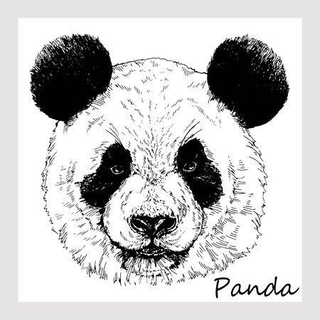 Hand drawn sketch style portrait of giant panda isolated on white background. Vector illustration.