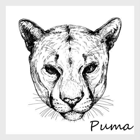 Retrato de estilo boceto dibujado a mano de puma aislado sobre fondo blanco. Ilustración de vector.