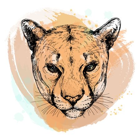 Hand drawn sketch style portrait of puma isolated on white background. Vector illustration. Çizim