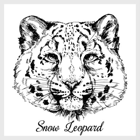Hand drawn sketch style portrait of snow leopard isolated on white background. Vector illustration.