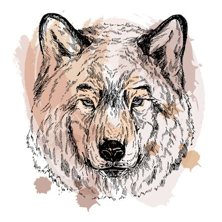 Hand drawn sketch style portrait of wolf isolated on white background. Vector illustration. Иллюстрация