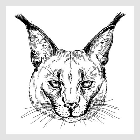 Hand drawn sketch style portrait of caracal isolated on white background. Vector illustration.