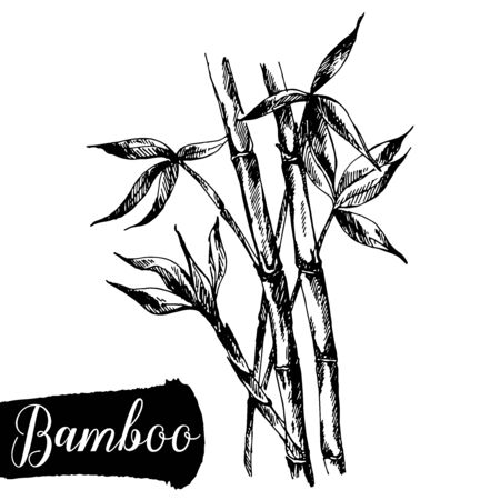 Hand drawn sketch style bamboo stem with leaves isolated on white background. Vector illustration.
