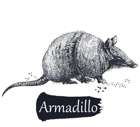 Hand drawn sketch style armadillo isolated on white background. Vector illustration. Çizim