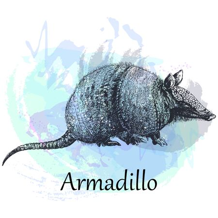Hand drawn sketch style armadillo isolated on white background. Vector illustration. Иллюстрация