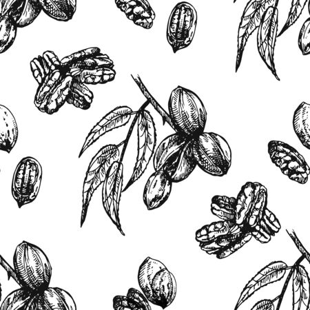 Seamless pattern of hand drawn sketch style pecan nuts isolated on white background. Vector illustration. Illustration