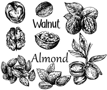 Set of hand drawn sketch style different kinds of nuts isolated on white background. Vector illustration. Ilustração