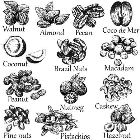 Ensemble de style de croquis dessinés à la main différents types de noix isolés sur fond blanc. Illustration vectorielle. Vecteurs