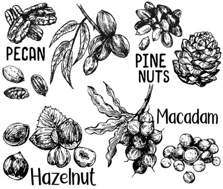 Set of hand drawn sketch style different kinds of nuts isolated on white background. Vector illustration. Stock Illustratie