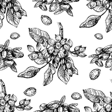 Seamless pattern of hand drawn sketch style pistachios isolated on white background. Vector illustration. Ilustrace