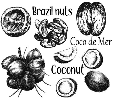 Set of hand drawn sketch style different kinds of nuts isolated on white background. Vector illustration. Illustration