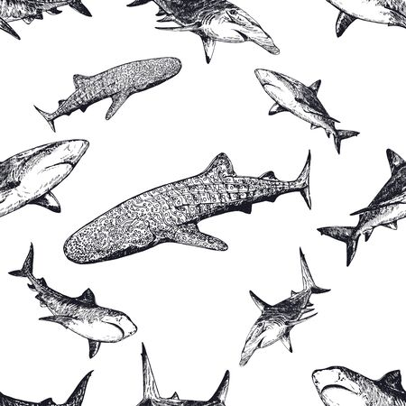 Seamless pattern of hand drawn sketch style sharks isolated on white background. Vector illustration. Illustration
