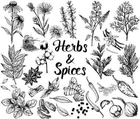 Set of hand drawn sketch style different kinds of herbs and spices isolated on white background. Vector illustration. Illustration