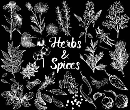 Set of hand drawn sketch style different kinds of herbs and spices isolated on black background. Vector illustration. Illustration