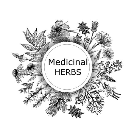 Poster card composition of hand drawn sketch style different kinds of medicinal plants isolated on white background. Vector illustration.