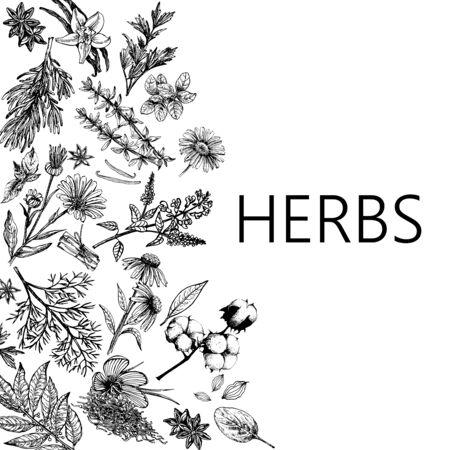 Composition de carte d'affiche de style de croquis dessinés à la main différents types de plantes isolées sur fond blanc. Illustration vectorielle.