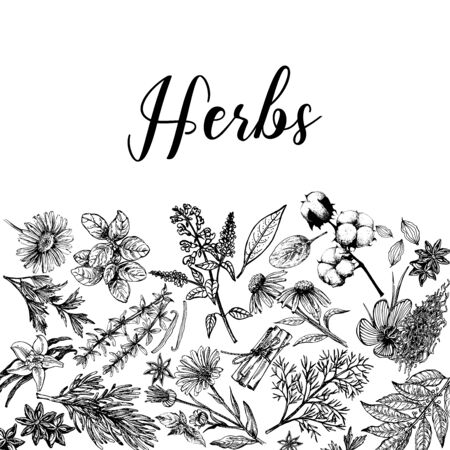 Poster card composition of hand drawn sketch style different kinds of plants isolated on white background. Vector illustration.