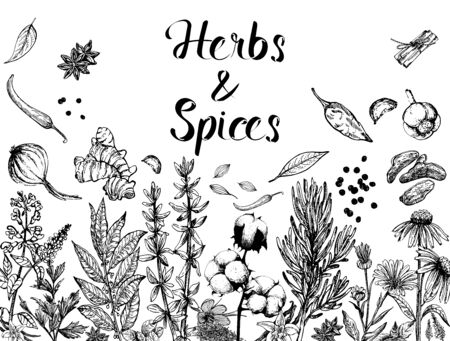 Poster card composition of hand drawn sketch style different kinds of herbs and spices isolated on white background. Vector illustration. Ilustração