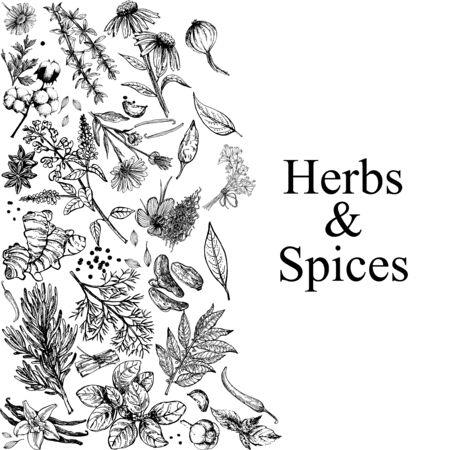 Composizione di carta poster di diversi tipi di erbe e spezie isolati su priorità bassa bianca di stile di schizzo disegnato a mano. Illustrazione vettoriale. Vettoriali