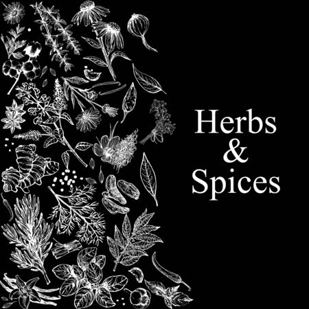 Poster card composition of hand drawn sketch style different kinds of herbs and spices isolated on black background. Chalkboard vector illustration.