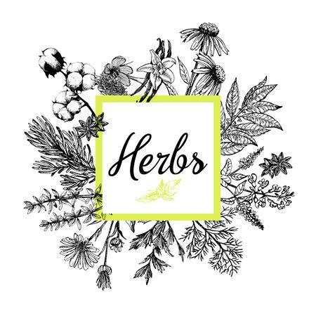 Plakat karta skład stylu szkic ręcznie rysowane różnego rodzaju roślin na białym tle. Ilustracja wektorowa.