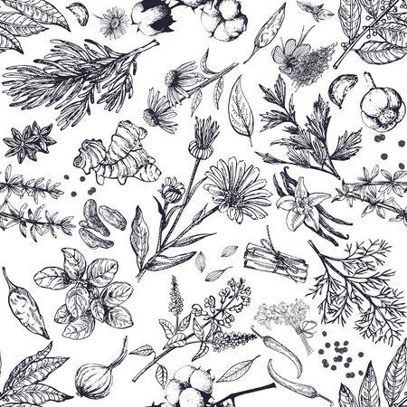 Modèle sans couture de style de croquis dessinés à la main différents types d'herbes et d'épices isolés sur fond blanc. Illustration vectorielle. Vecteurs