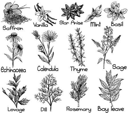 Ensemble de style de croquis dessinés à la main différents types de plantes isolés sur fond blanc. Illustration vectorielle. Vecteurs