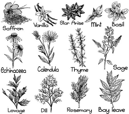 Set di mano bozzetto stile diversi tipi di piante isolate su sfondo bianco. Illustrazione vettoriale. Vettoriali