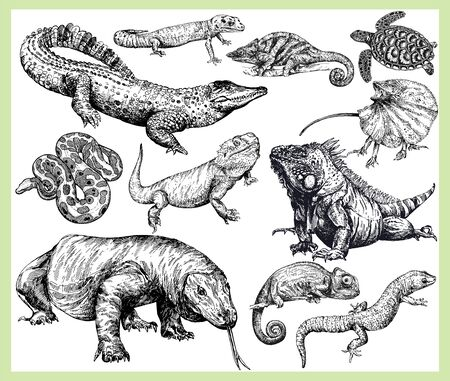 Big set of hand drawn sketch style reptiles isolated on white background. Vector illustration.