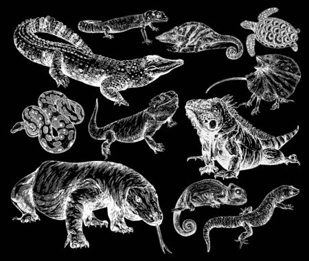 Big set of hand drawn sketch style reptiles isolated on black background. Vector illustration.