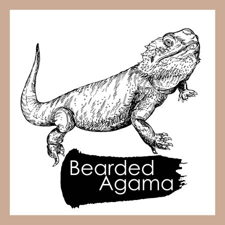 Hand drawn sketch style bearded dragon isolated on white background. Vector illustration.
