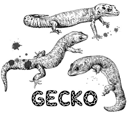 Set of hand drawn sketch style geckos isolated on white background. Vector illustration.