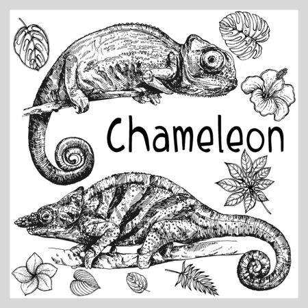 Set of hand drawn sketch style chameleons and plants isolated on white background. Vector illustration. Ilustração