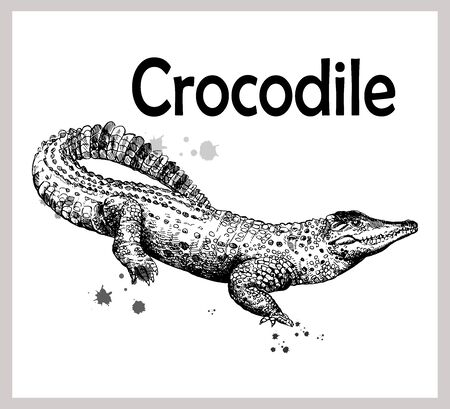 Hand drawn sketch style crocodile isolated on white background. Vector illustration.