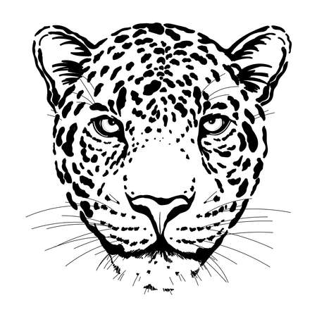 Hand drawn sketch style portrait of leopard isolated on white background. Vector illustration. Ilustração