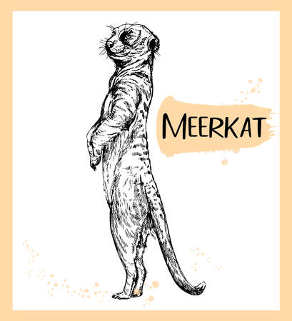 Hand drawn sketch style meerkat isolated on white background. Vector illustration.