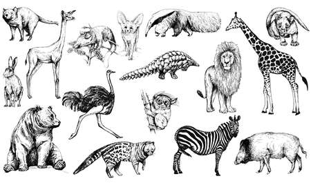 Big set of hand drawn sketch style animals isolated on white background. Vector illustration.