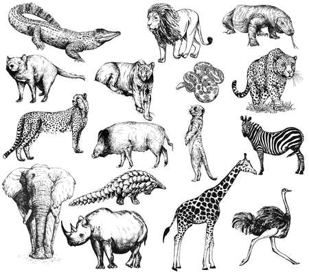 Big set of hand drawn sketch style animals isolated on white background. Vector illustration. 免版税图像 - 158616864