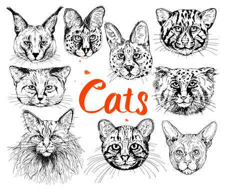 Big set of hand drawn sketch style small cats isolated on white background. Vector illustration. Ilustración de vector
