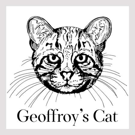 Hand drawn sketch style Geoffroy's cat isolated on white background. Vector illustration.