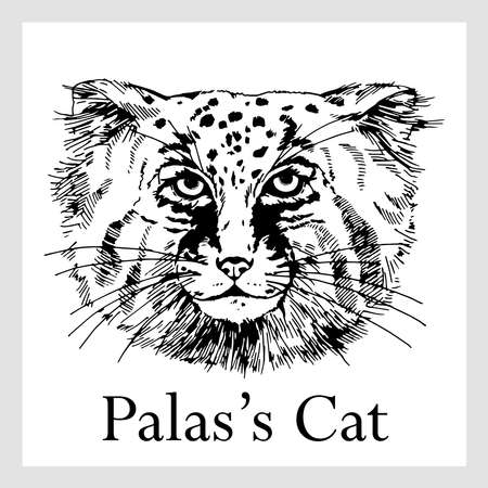 Hand drawn sketch style Pallas's cat isolated on white background. Vector illustration. Ilustración de vector