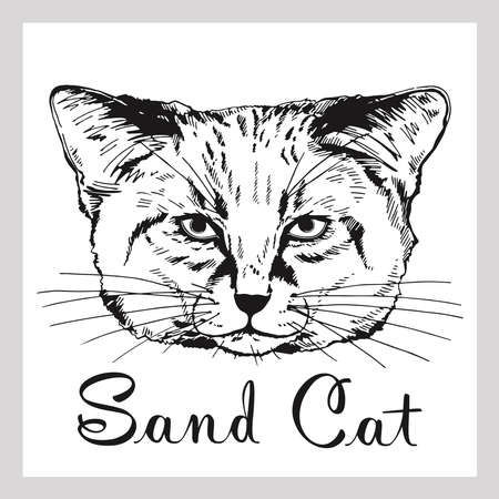 Hand drawn sketch style sand cat isolated on white background. Vector illustration.