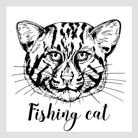 Hand drawn sketch style fishing cat isolated on white background. Vector illustration. Reklamní fotografie - 162438576