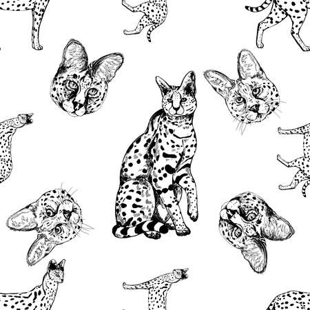 Seamless pattern of hand drawn sketch style Servals and Savannah Cats isolated on white background. Vector illustration. 矢量图像
