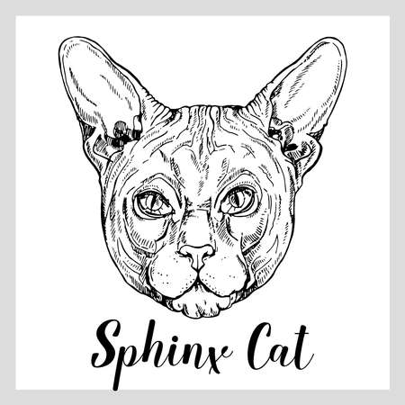 Hand drawn sketch style Sphynx cat isolated on white background. Vector illustration.