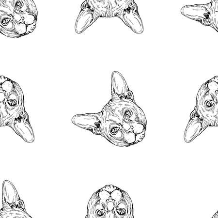 Seamless pattern of hand drawn sketch style Sphynx cat isolated on white background. Vector illustration.