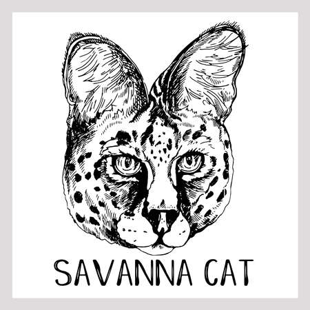 Hand drawn sketch style portrait of Savannah Cat isolated on white background. Vector illustration. 矢量图像