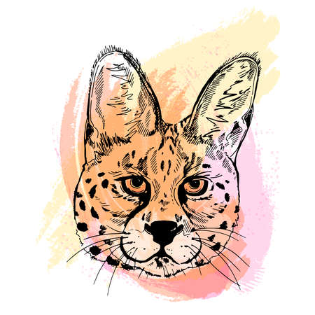 Hand drawn sketch style portrait of serval isolated on white background. Vector illustration.