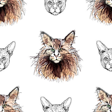 Seamless pattern of hand drawn sketch style Maine Coon and Sphynx cats isolated on white background. 免版税图像